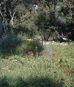 flowers technion green 173